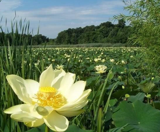 Image via  Erie County Master Gardener Blog