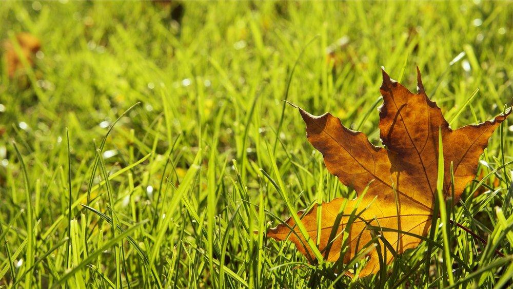 grass-698649_1920.jpg
