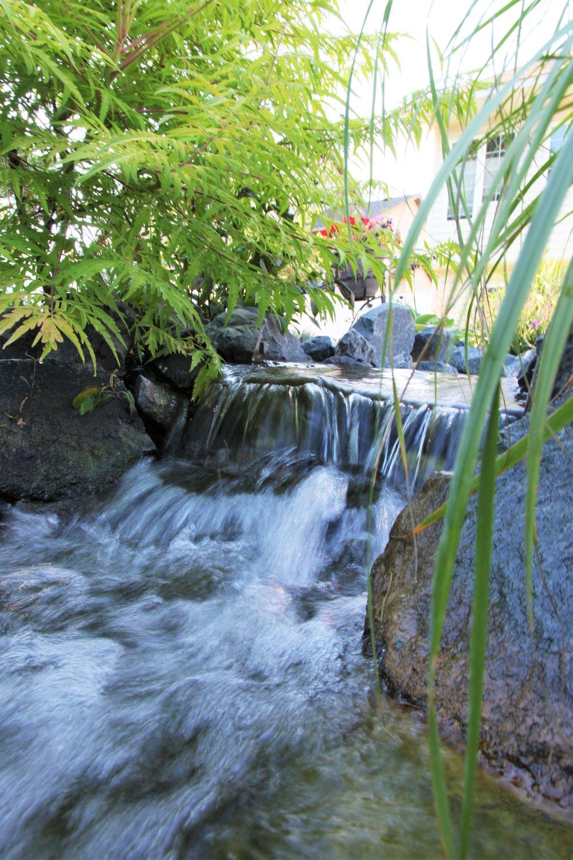 Moms Design Build - Backyard Pond Water Feature
