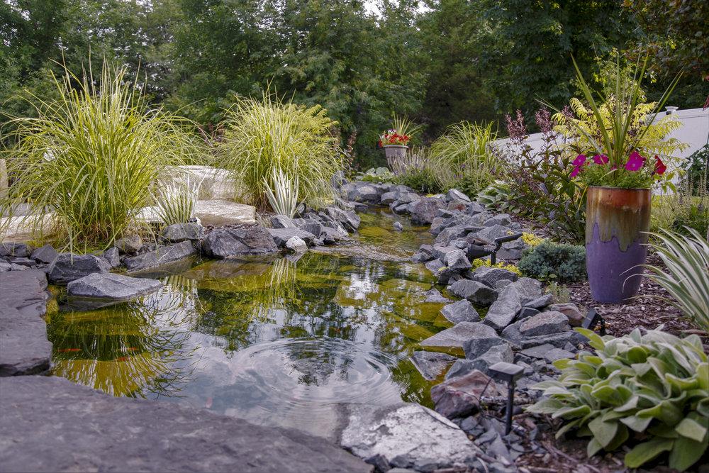 Moms Design Build - Water Feature Water plants.jpg
