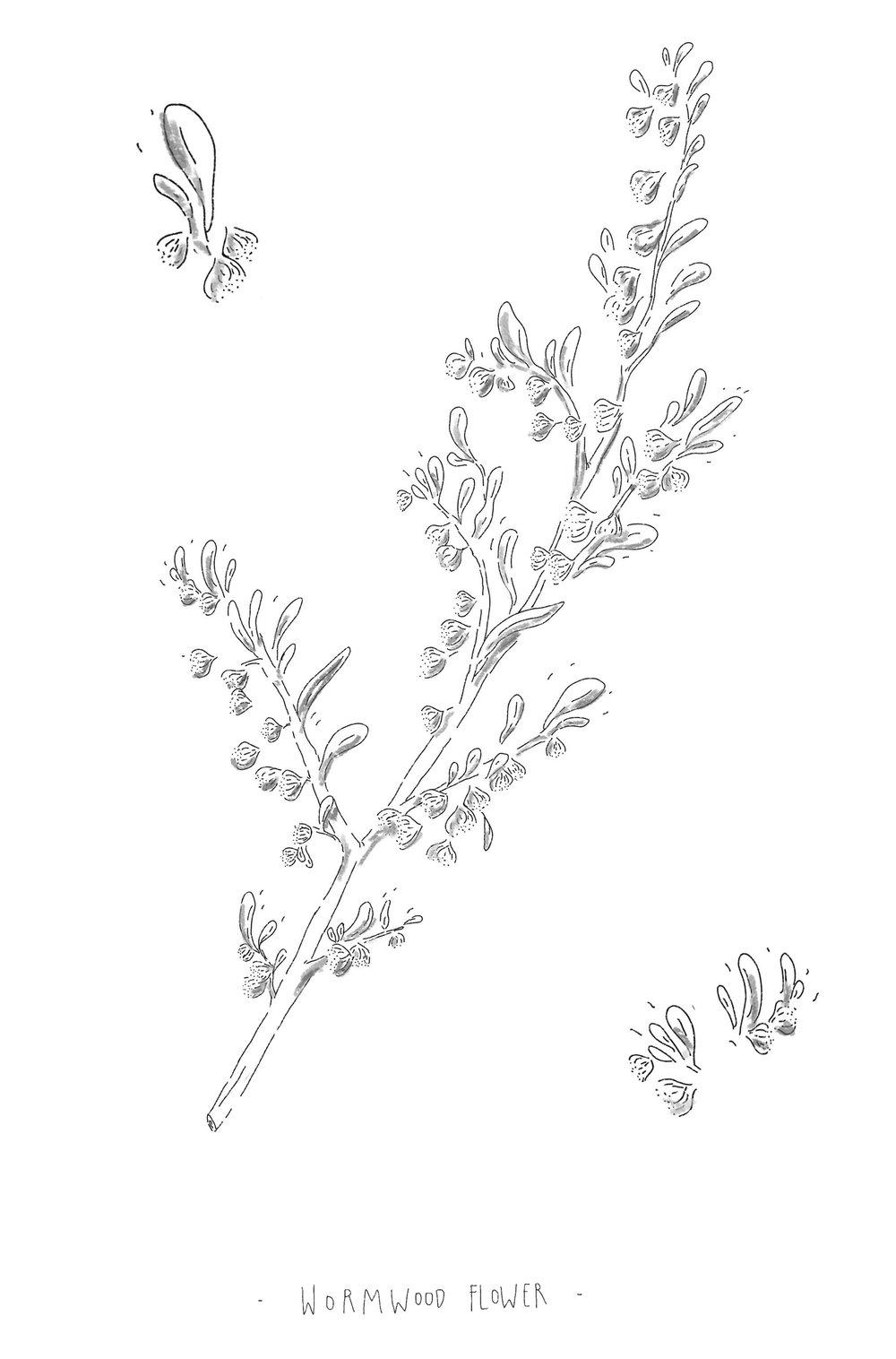 wormwood flower m.jpg