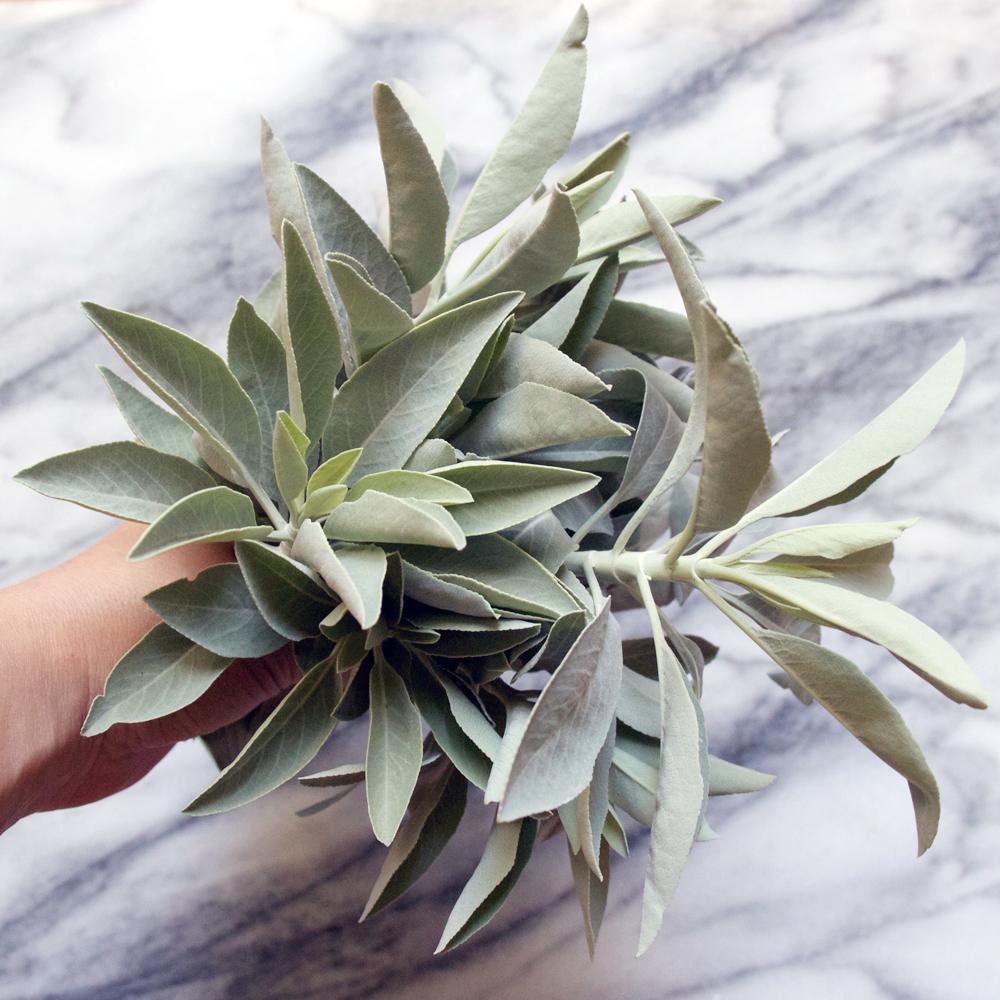 Salvia Apiana // White Sage