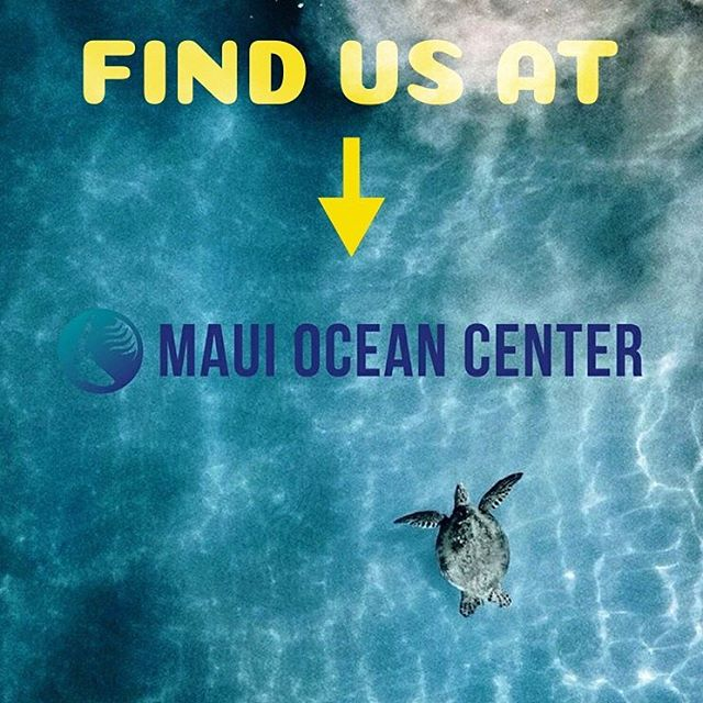 HoneySown Herbs is available to shop at the Maui Ocean Treasures gift shop @mauioceancenter !!!!!! This place is magical, looking for an educational activity for kids? A sweet date idea? How about a gift for that ocean lover in your circle? Head on over to the Maui Ocean Center for a great experience 🐠🐟🐬 #splasharound #thingstodoinmaui #honeysownherbs #mauiocencenter #hawaiivacation #hawaiiactivities #saltwater #amazingoceans #tropicalfun