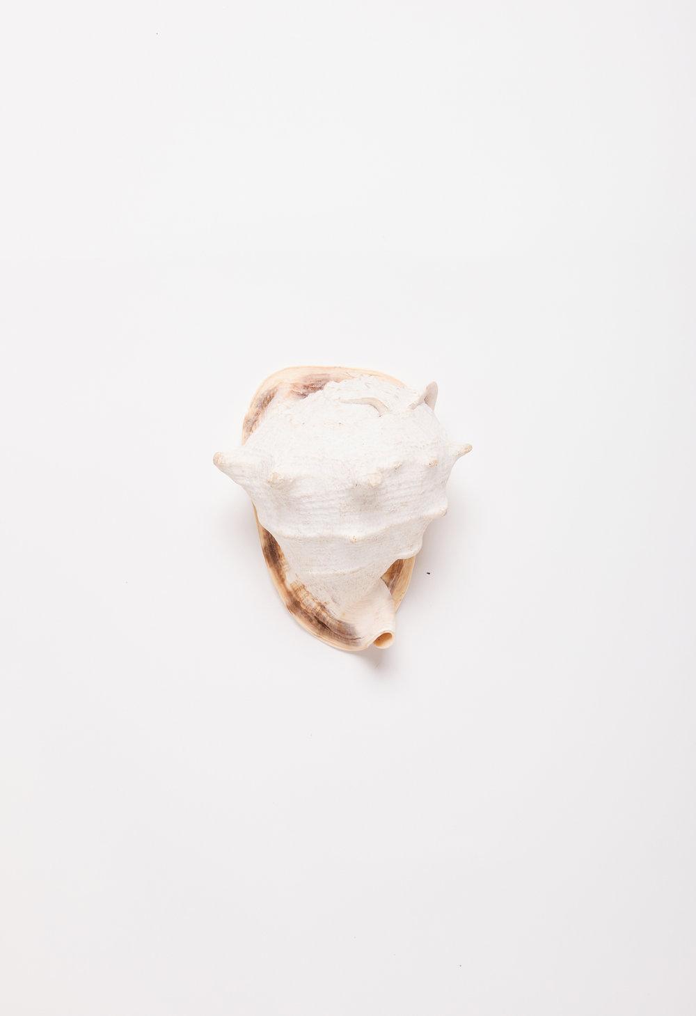 A-shell.jpg