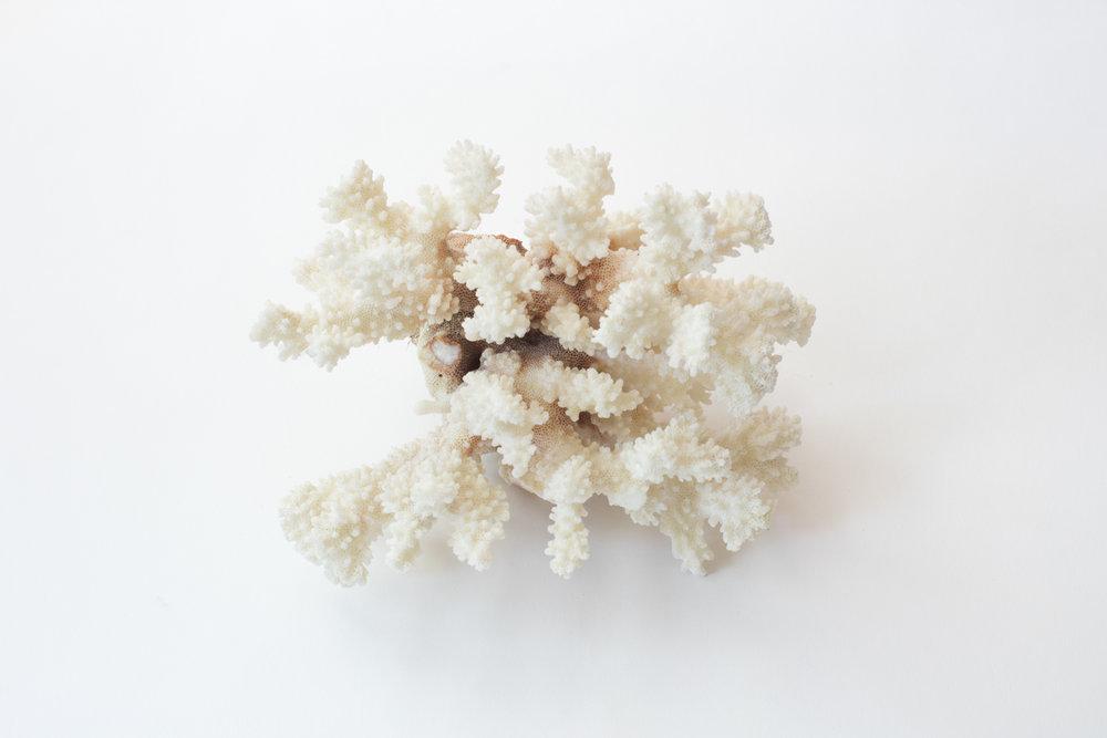 Calcium substitute; used for growing new bones; E00178