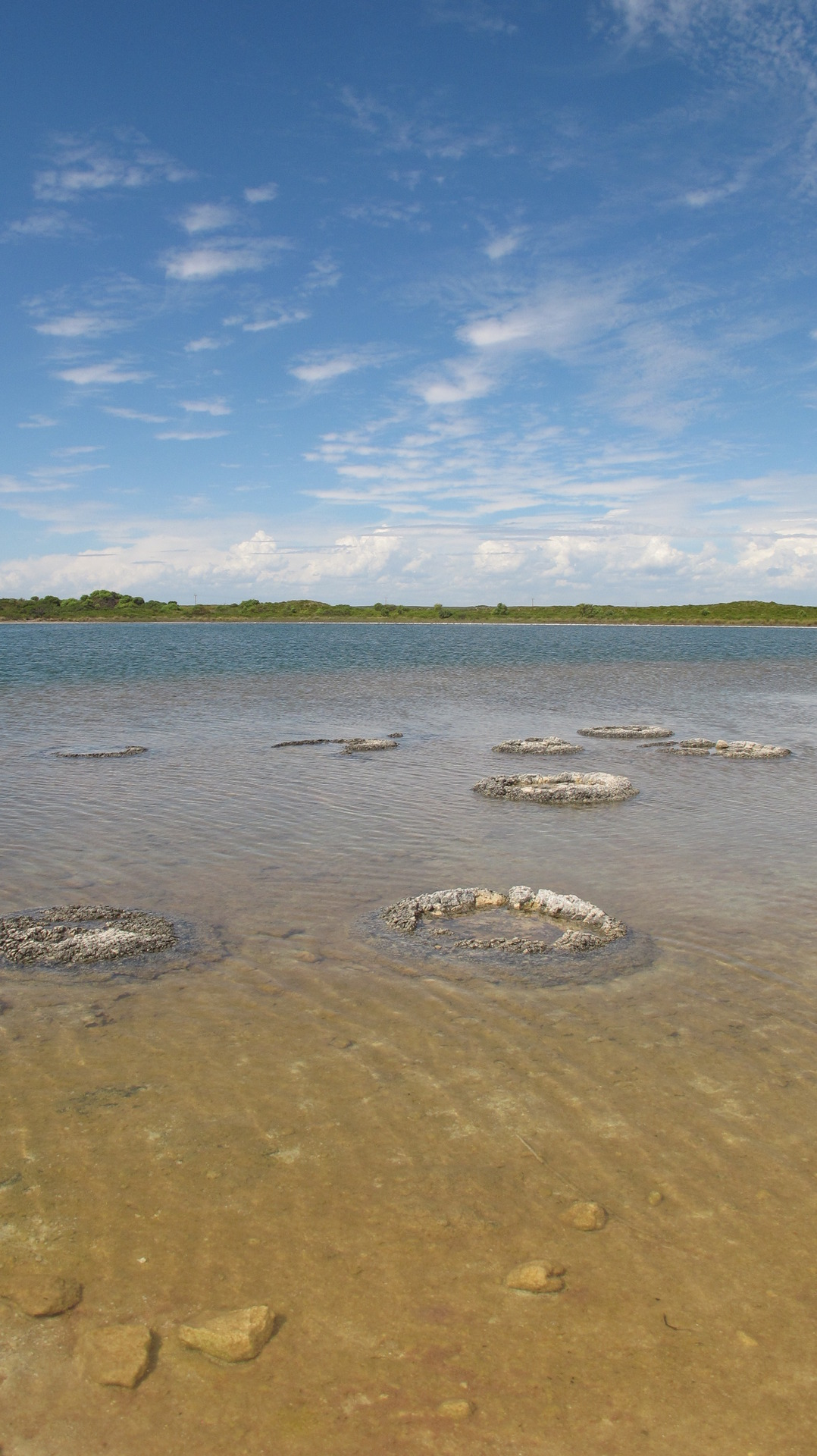 Lake Thetis Stromatolites