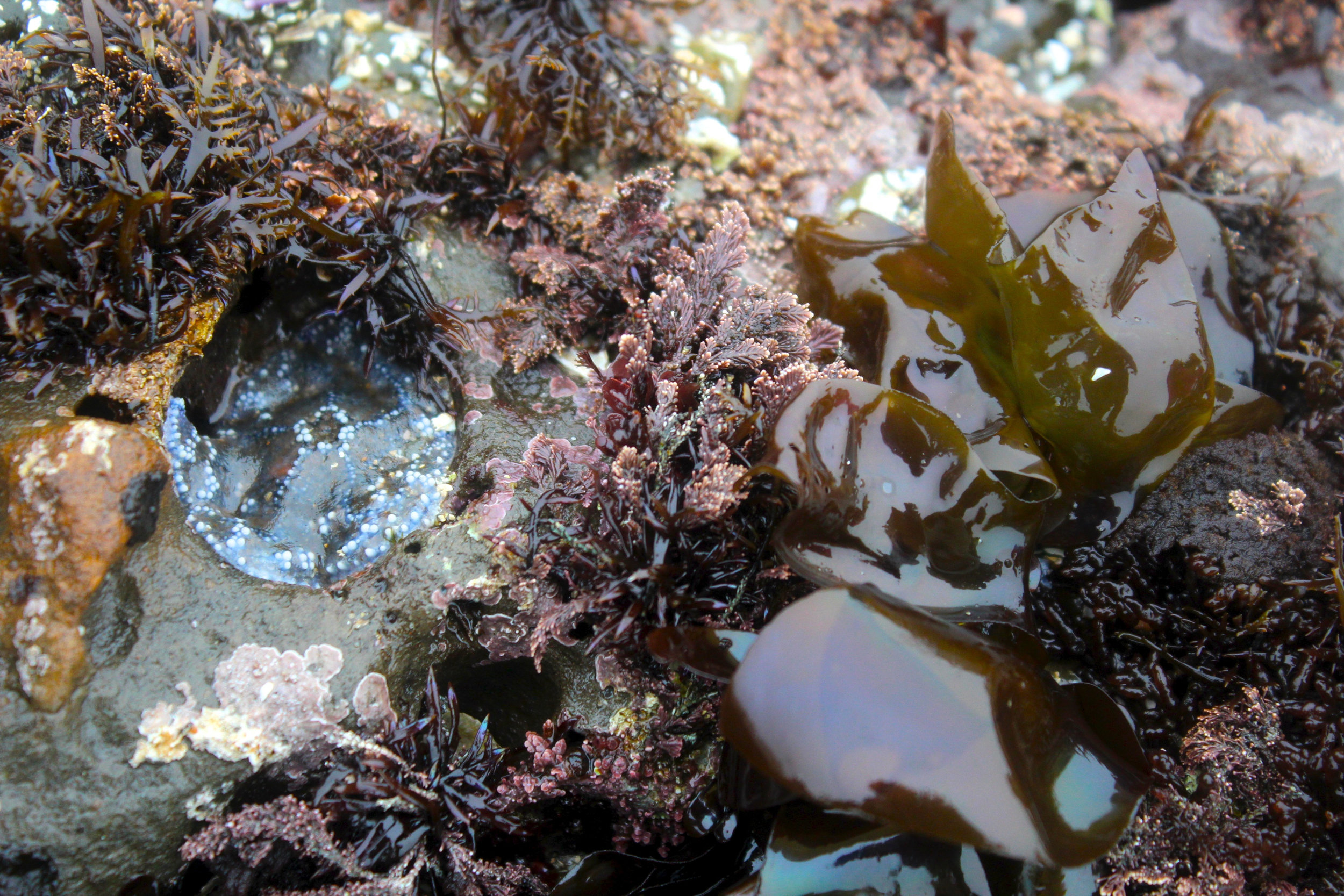 Can you find the sea star? Photo: A Bergamin.