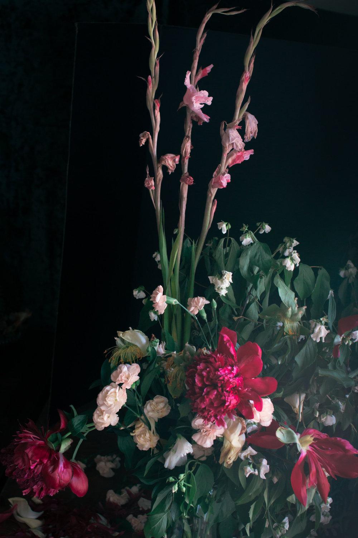 rhubarb and roses 4214 (1 of 1).jpg