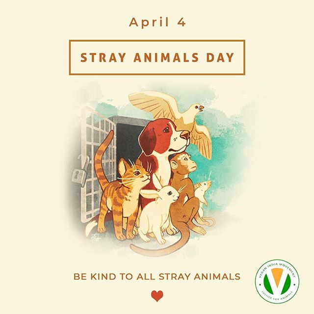#strayanimalday #strayanimals #alllivesmatter #allcreaturesgreatandsmall #animal #animalrights #animalwelfare #instakind #kindness #kindnessaboveeverything #instacare #straydog #straycat #cat #dog #respectlife
