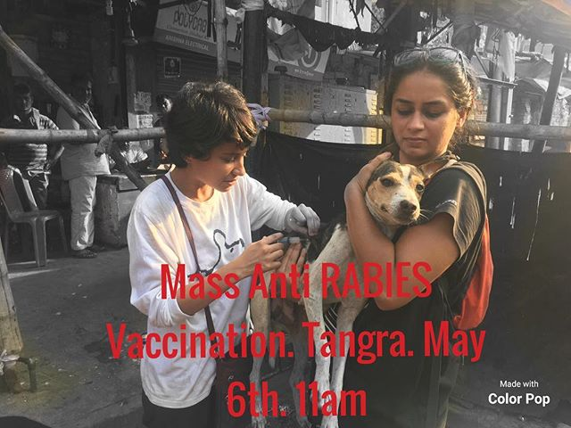 Join us tomorrow in our efforts to eradicate rabies! Please leave a comment to volunteer with us . END SUFFERING, now. #likeadog #endrabiesnow #kolkata #animalwelfare #animalrights #dog #dogood #instacare #instagood #alllivesmatter #compassion #immunization #vaccination #streetanimals #streetdog #streetdogsofindia #streetdogrescue #savelives #endsuffering #join #regram #instadog #streetlife