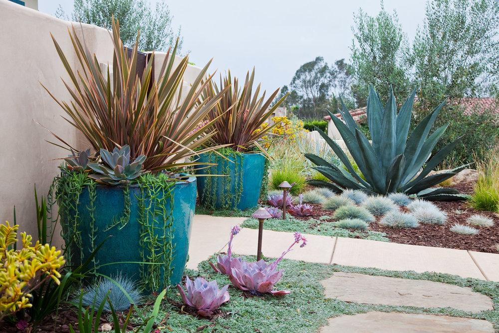 Succulent Style