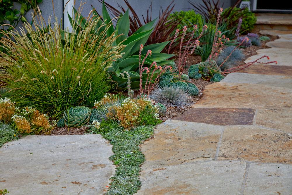PlantFlagstone_Scribner.jpg