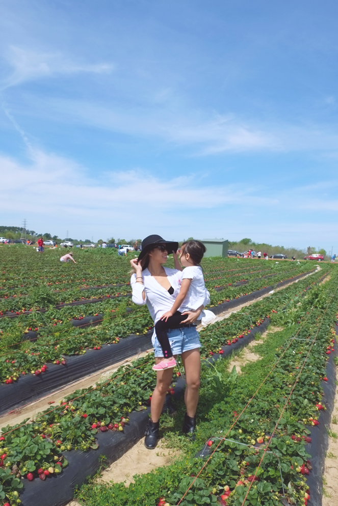 strawberryfields_02