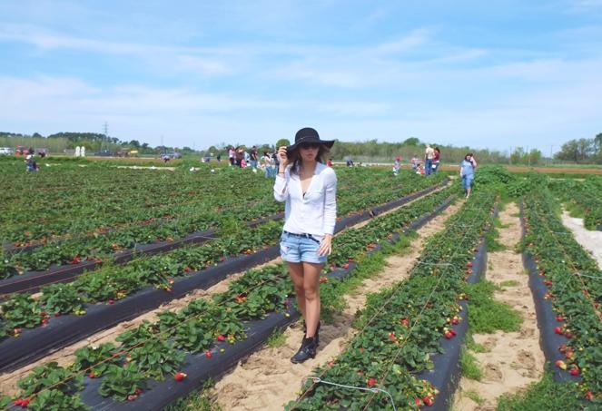 strawberryfields_03