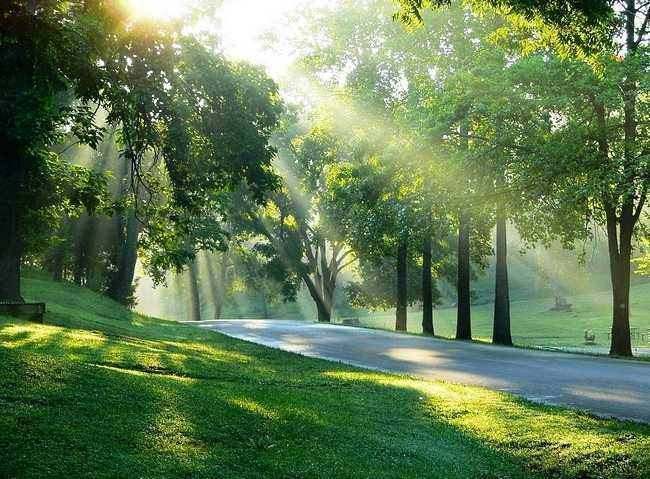 god-plants-light-in-his-followers.jpg