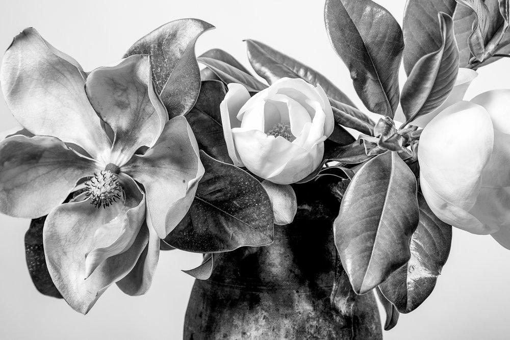 magnolia-161.jpg
