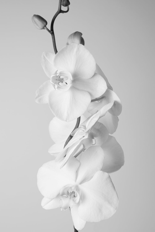 Orchid98.jpg