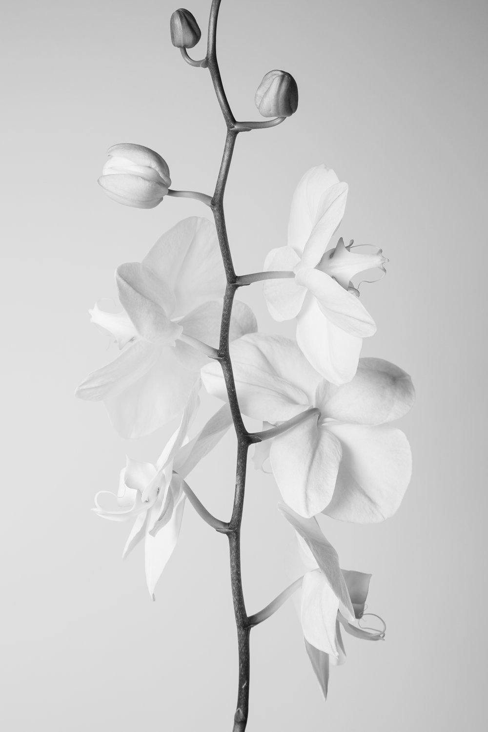 Orchid127.jpg