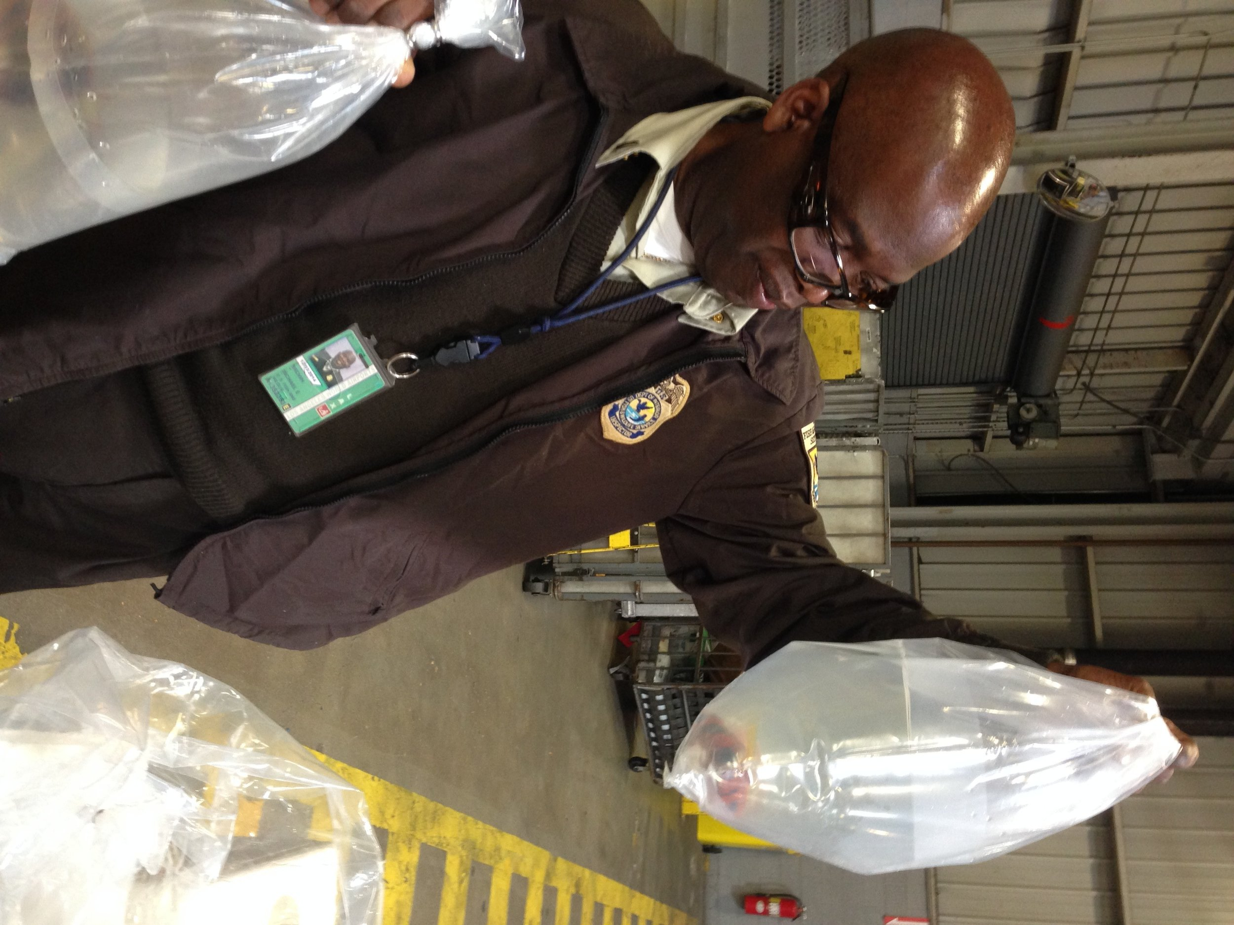 Michael Brown, USFW inspector, looking at a legal shipment of fish that came through LAX. These fish came from Australia, presumably for a gap year in the States.