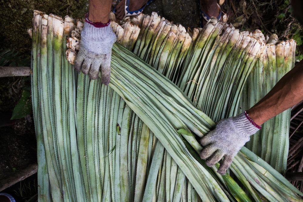 15. Pinatex - Pineapple plant based leather alternative- Photo by Jacob-RawAssembly-Thea Maentz.jpg
