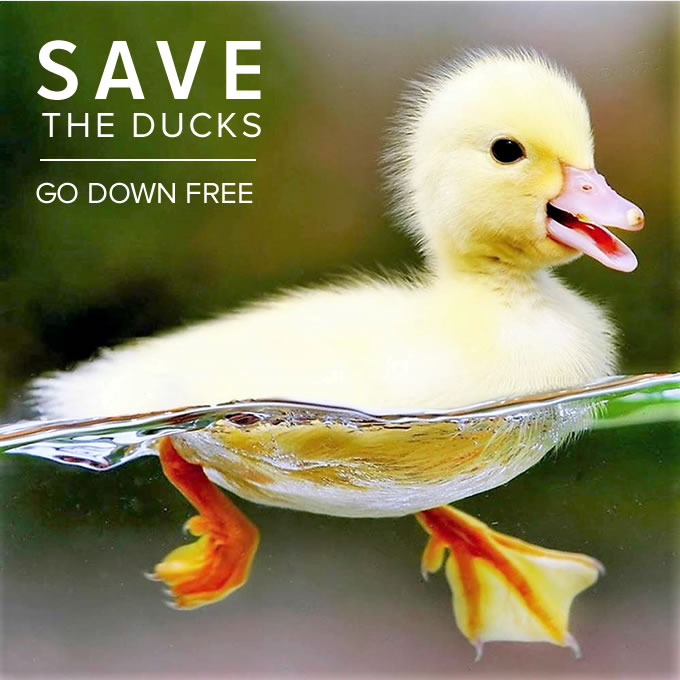 SAVE THE DUCKS - GO DOWN FREE