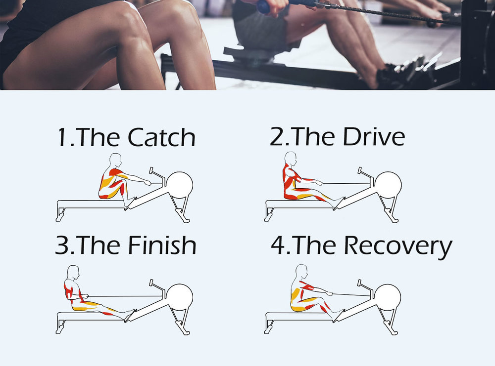 THE SEQUENCE & STAGES OF THE ROWING STROKE