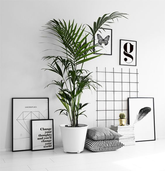 plants 3.jpg