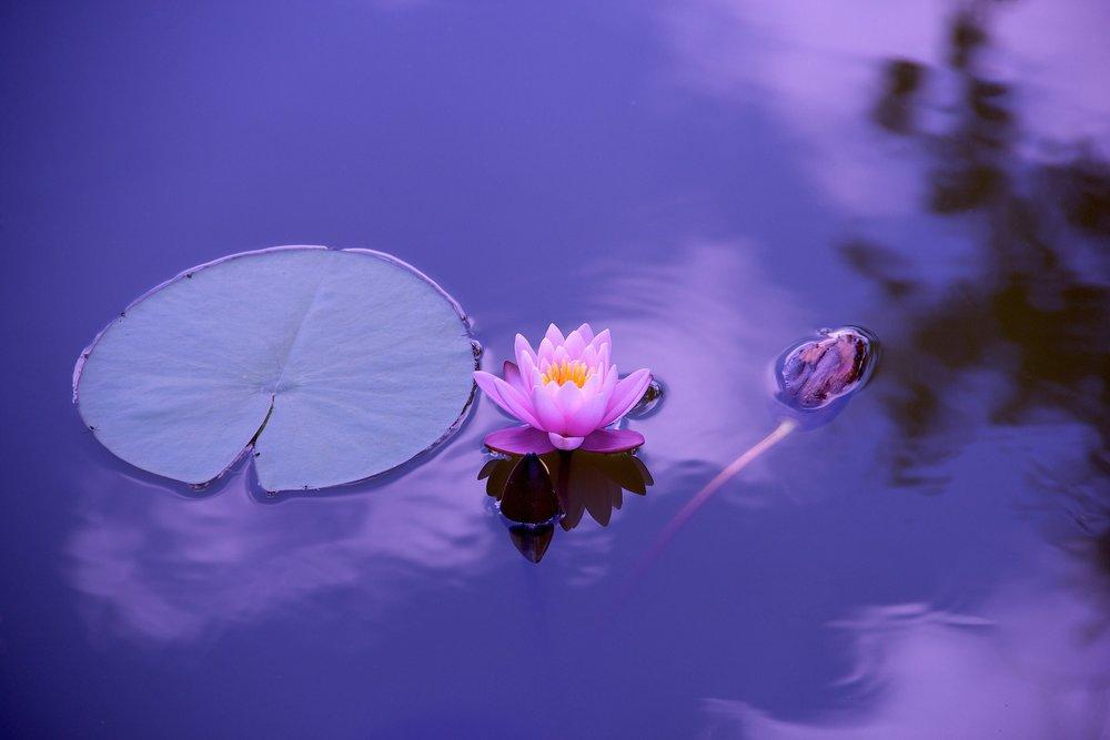 BlueWave_Mindfulness.jpg