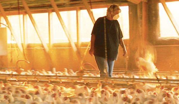 Food Inc. - Een documentaire (al enige jaren terug, duur ±1 uur) over de voedselindustrie. Geeft inzicht in intensieve veehouderij, GMOs, en nog veel meer ingewikkelde politieke themas in de argo sector.