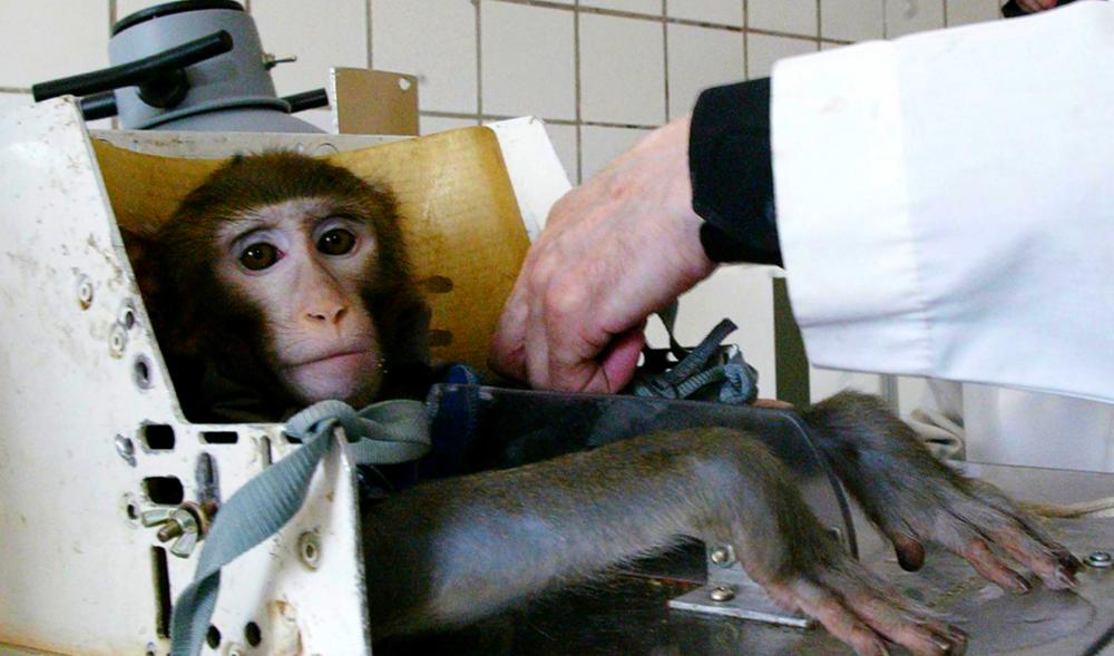 Animal Cruelty... deze Brands ogen leuk, maar zitten helemaal fout. - Een Engelstalig artikel over merken die goeie schijn hebben, maar nog steeds gruwelijke dierproef-testen uitvoeren.
