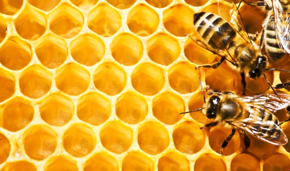 Pesticiden in de honing - Het laat zien waarom bijen het wereldwijd zwaar hebben.