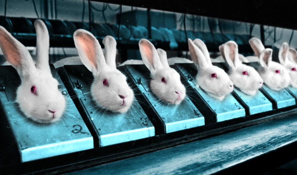 Dierproeven?! - In deze grote Britse database van PETA kun je DIERPROEFVRIJE cosmetica en verzorgingsproducten vinden