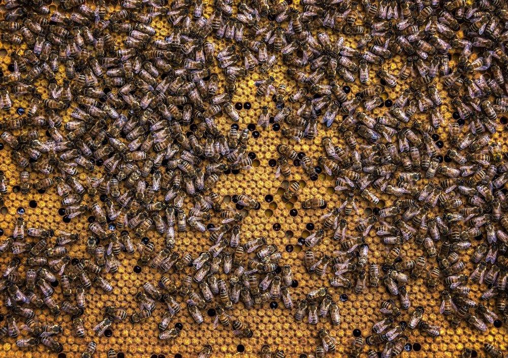 beehive-beekeeping-bees-971355.jpg