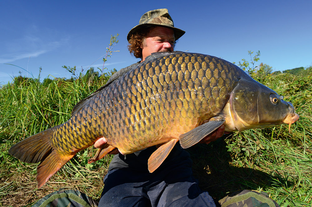 The carp was built like a bulldozer, with brand shoulders and muscular flanks.
