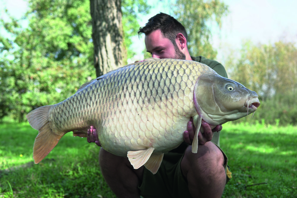 Dan's PB common from Sumbqr.