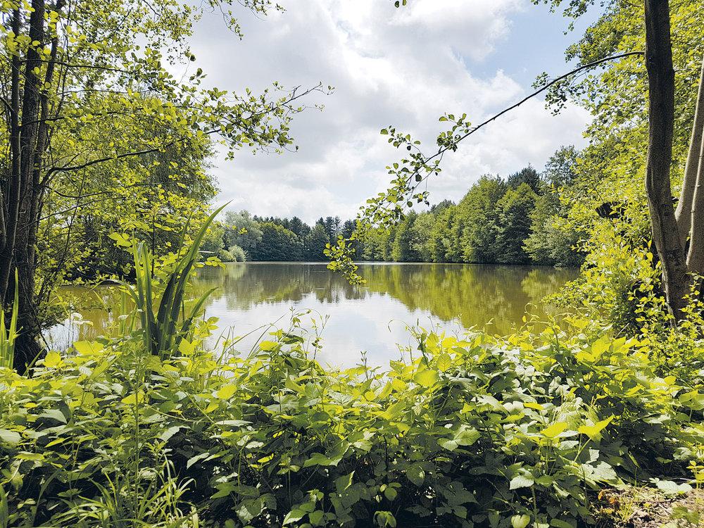 Orchard-lake-1.jpg