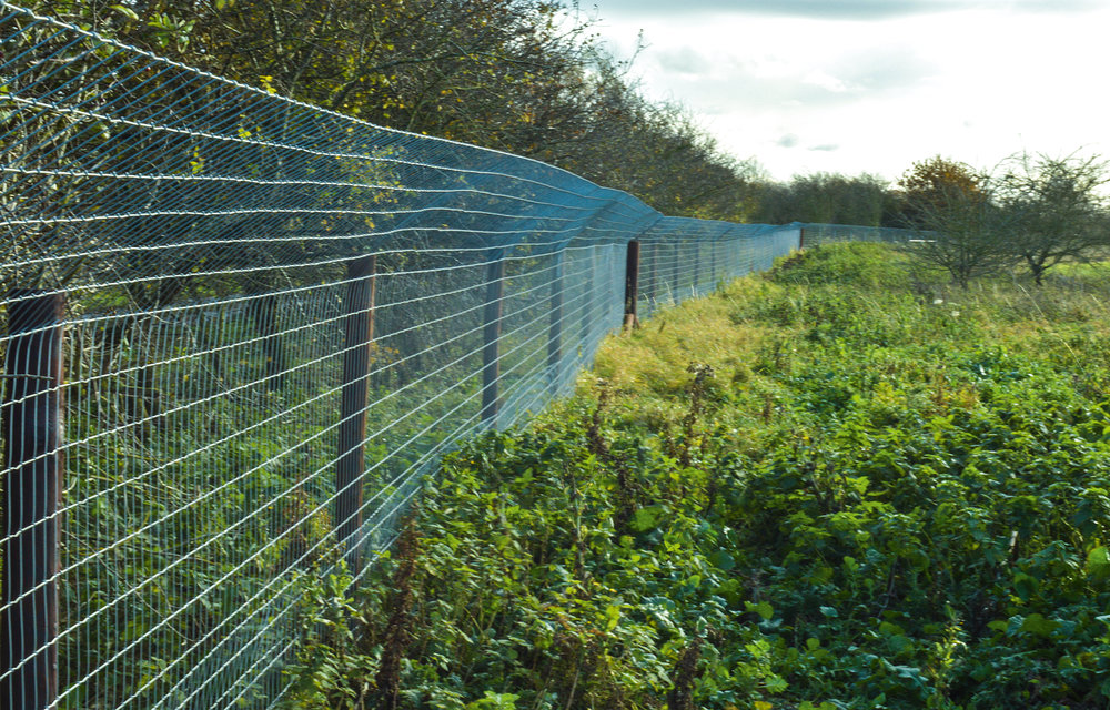 Function over form, must come first. Yet this recently erected fence is now undetectable, hidden away behind a hedgerow