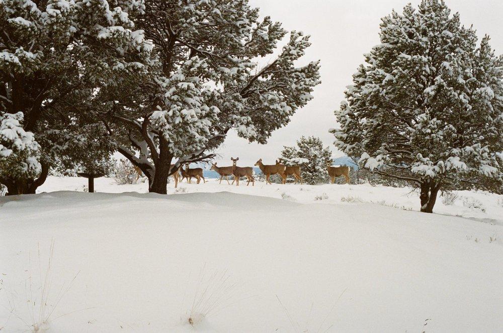 snow-forest-trees-winter.jpg