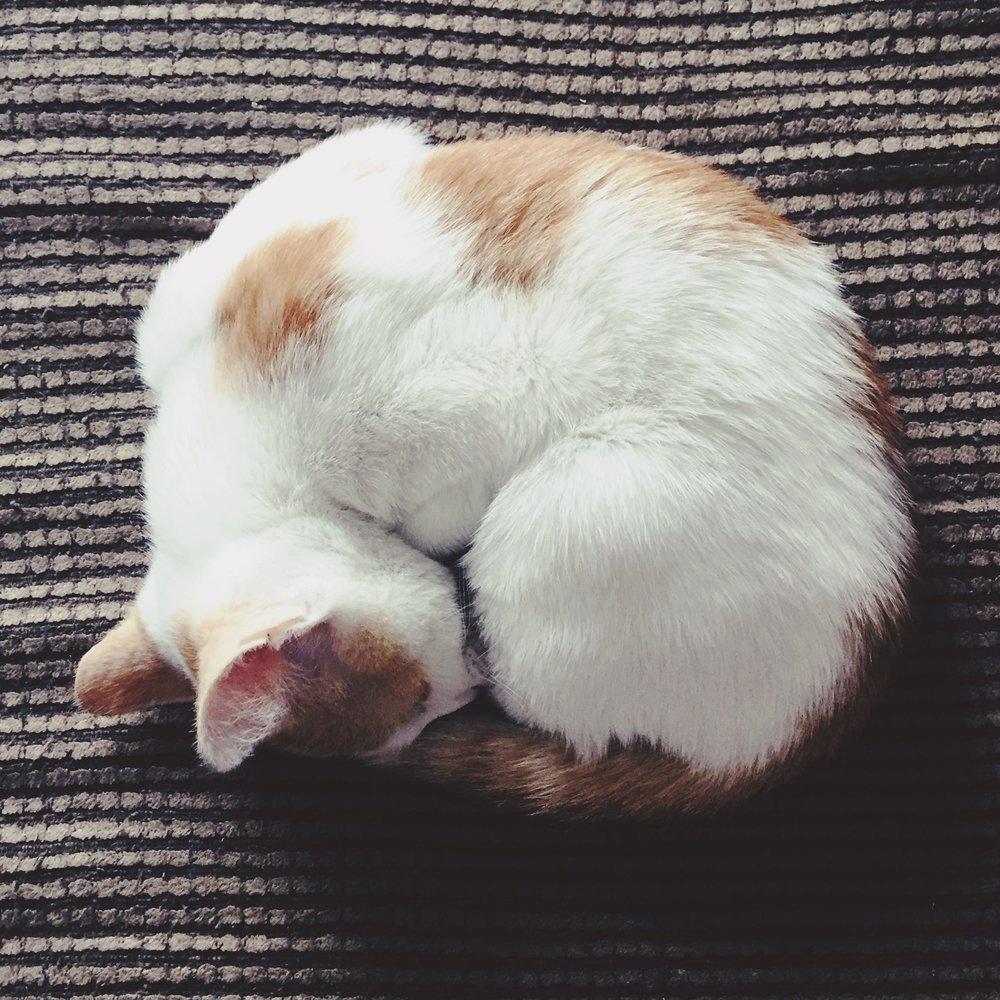 Sleepy Tink