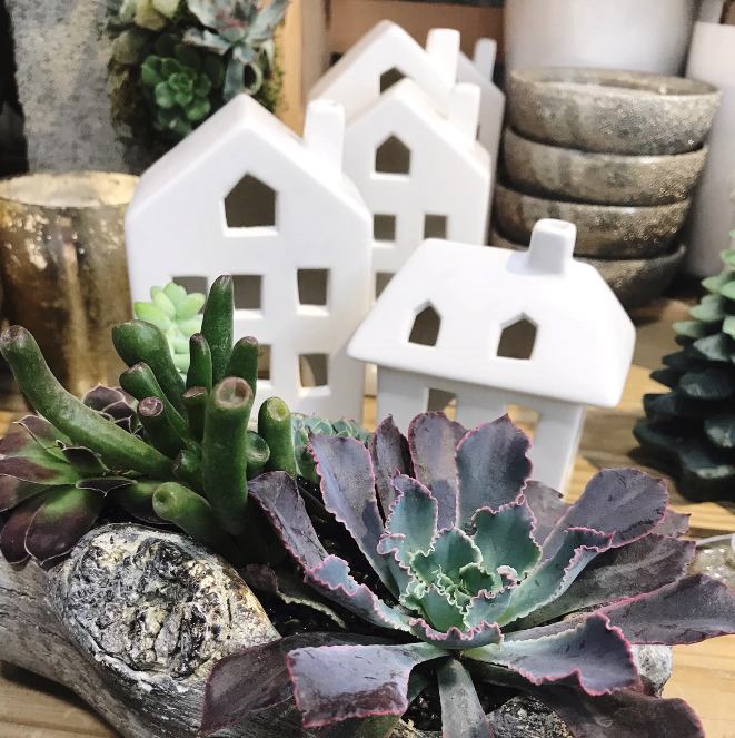 succulents & ceramic home from west seattle nursery - Succulents are always a beautiful, easy-care plant option, which is exactly what I look for when trying to find plants for my house. The West Seattle Nursery has many succulents and fantastic containers to choose from that fit a variety of decor styles. And right now they have a make-your-own wreaths for $25. What a fun holiday date idea!5275 California Ave SW  |  206.935.9276  westseattlenursery.com