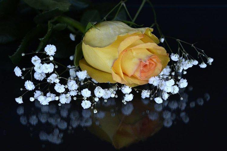 flowers_8d3999a624759840ebfd26ccd27628b8.jpg