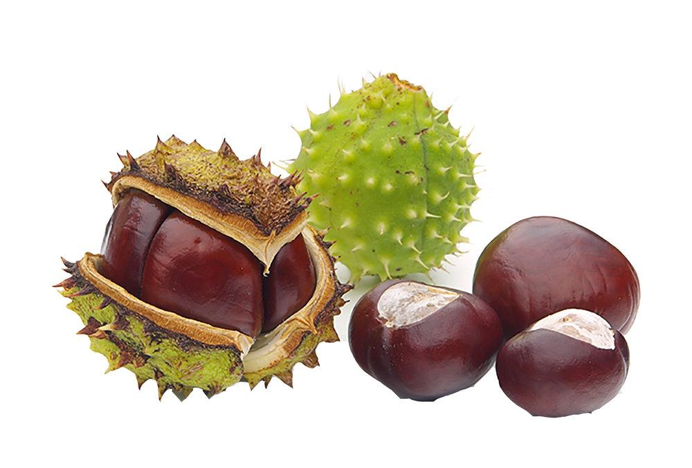 Castor Seed Oil -
