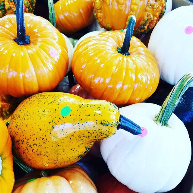 Pumpkin Season🍊  #FarmersMarket #saturday #HappyPlace #GoodVibesOnly #CountryLife #fall