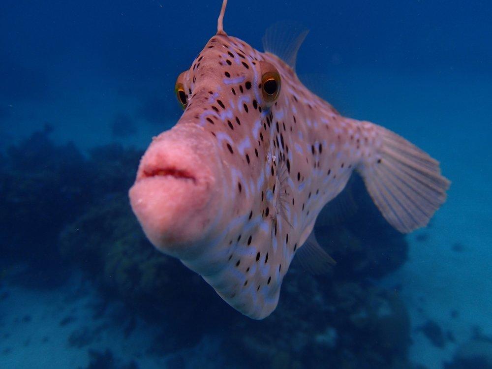 Fish Kiss.jpg