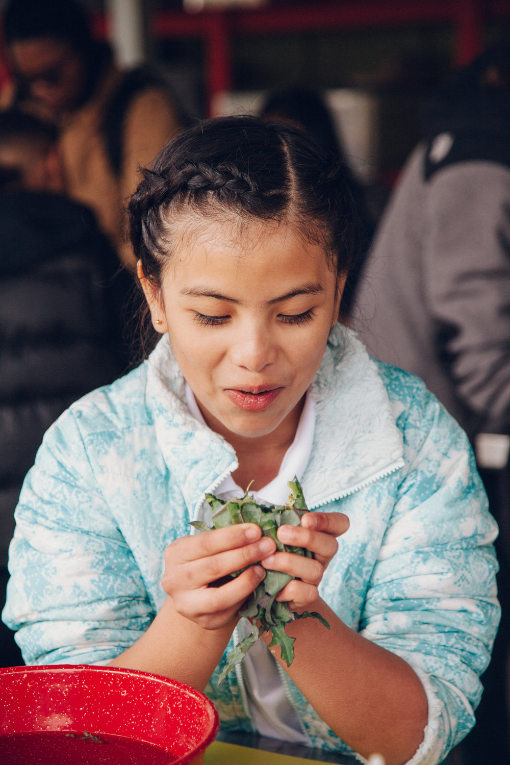 Provided nearly 12,000 students the opportunity to learn firsthand where their food comes from and why it matters through our farm field trip program at SMC Farm -