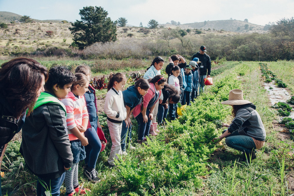 We develop students' environmental literacy through practical experience of farm-based, food systems management. We build or reinforce each students' understanding of the connections between food, health, and the environment. -