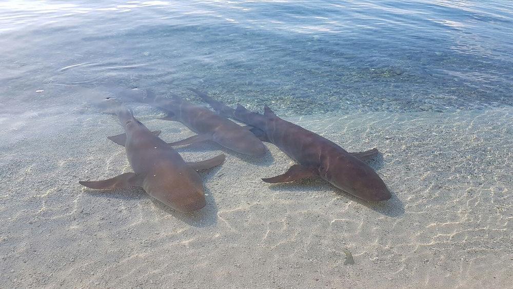 © Te Mana Travels — Sharks