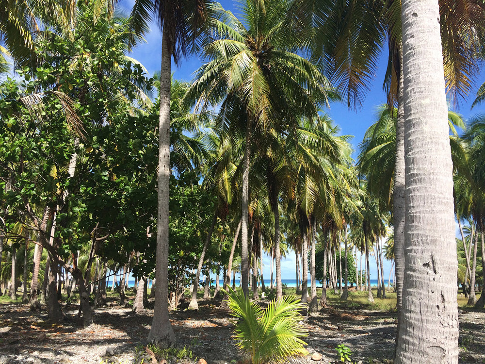 © Te Mana Travels — Palm tree forest