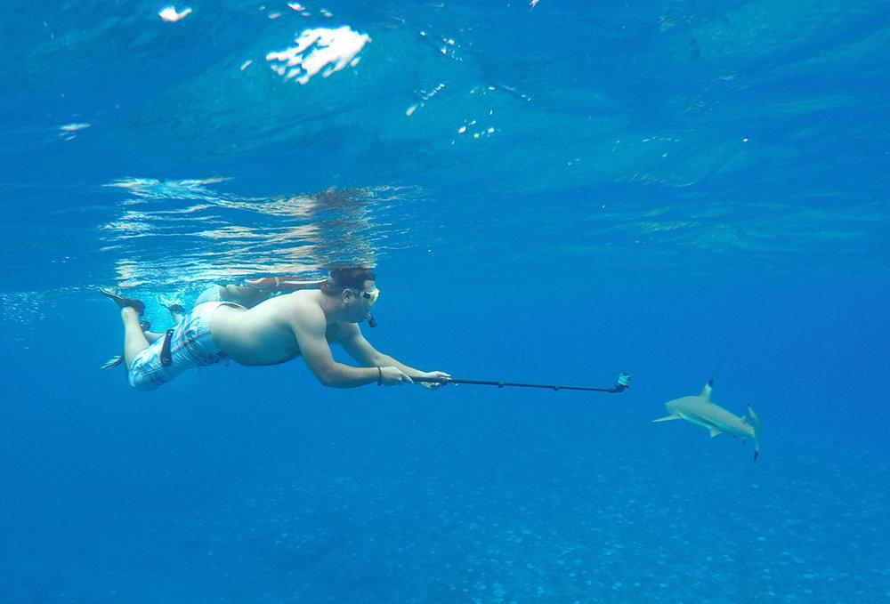 © Te Mana Travels and Tohoro Bora Bora Eco-Snorkeling and Whale Watching