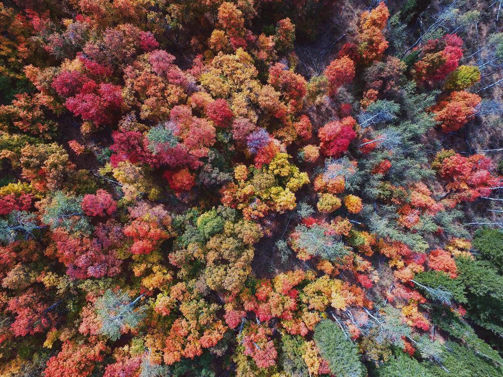 autumntreesfilter.jpg